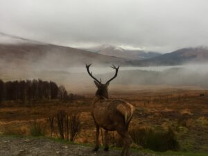 see wildlife within 2 hours of Denver Chris Ponzi Elk